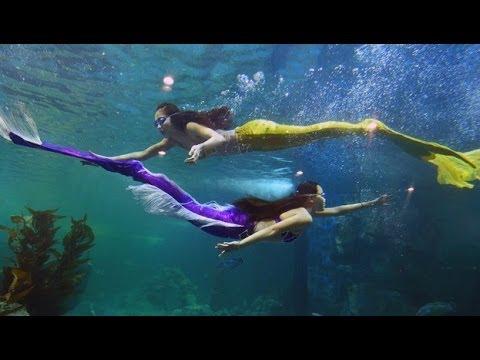 Largest Aquarium in Vietnam, Vinpearl Aquarium Hanoi with Mermaid ...