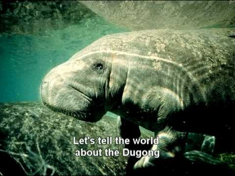 Dugong Song Lets Love The Dugong YouTube