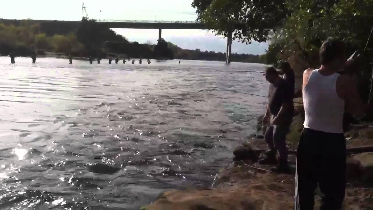 November 2012 nimbus dam salmon fishing youtube for Nimbus dam fishing