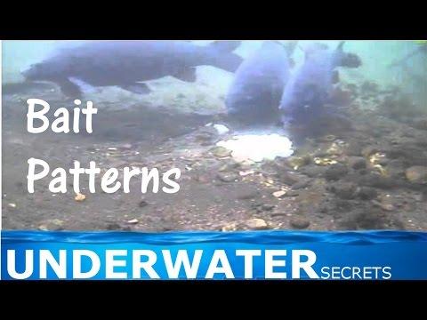 Bait patterns for carp - Kapre pod hladinou
