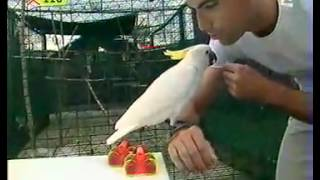 Le Perroquet Qui Sait Tout Faire