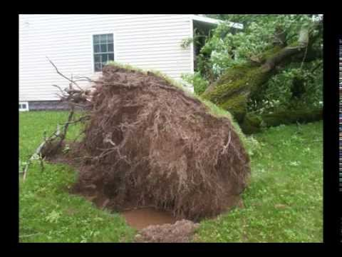 Hurricane Arthur Destruction Fredericton