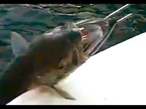 Big Barracuda Fishing Fort Lauderdale
