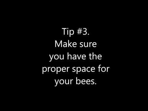 Urban Beekeeping Tips for Dummies - How to Start Beekeeping for Beginer