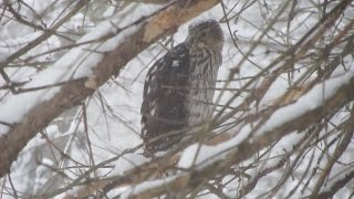 Some of my Winter Feathered Friends  ~ Feb. 2014