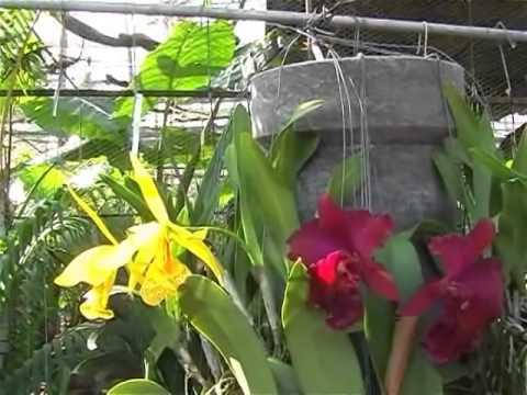 Tham quan vườn lan đẹp 3