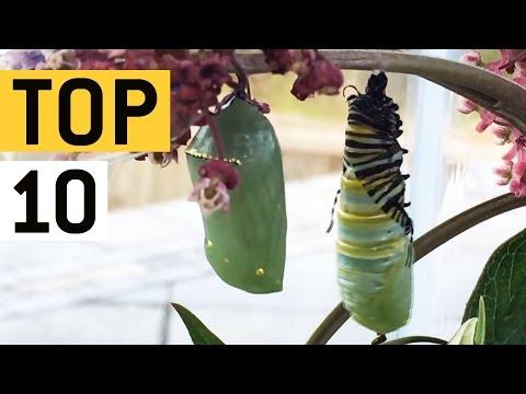 10 strašidelných vecí v prírode