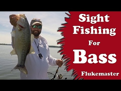 Bass Fishing - Sight Fishing for Bass
