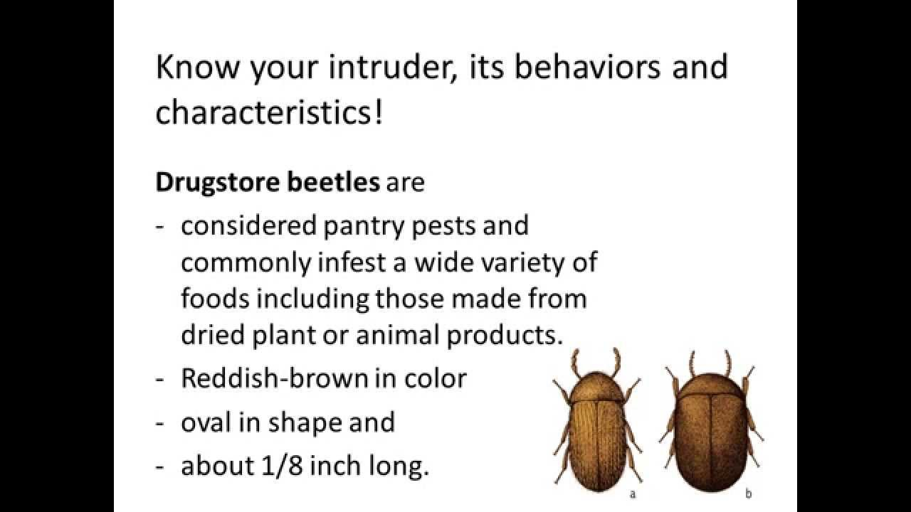 how to get rid of christmas beetles