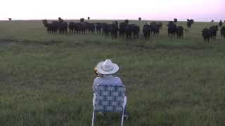 Serenading the cattle with my trombone (Lorde - Royals)