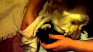 Dog Having Puppies
