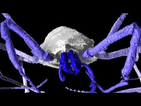 Ancient Spider-Like Arachnid Revealed In X-Rays | Video