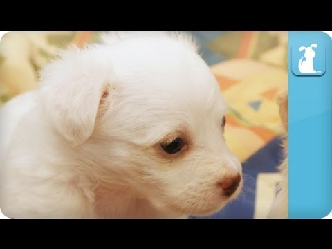 Puppies, Puppies, and More Puppies Episode 2 - YouTube