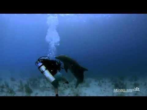 Chú Cá Heo Đòi Giao Phối Với Người