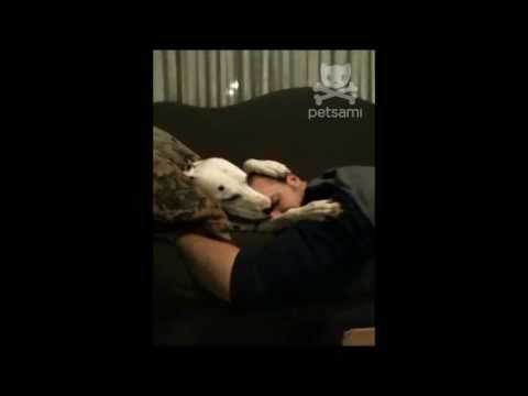 Dalmatian consoles her sad owner