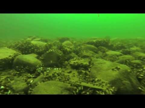 Fishing the Dead Sea - Mille Lacs Lake - Zebra Mussels