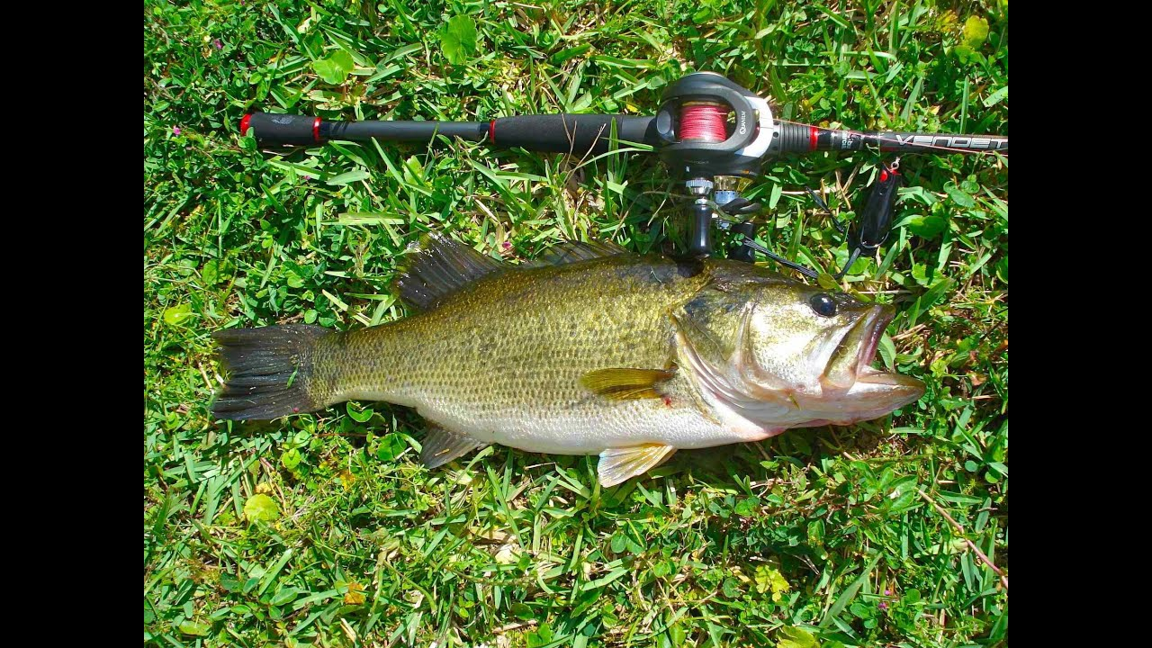 Fishing for bass spinning 02 west palm beach florida for Florida freshwater fishing regulations