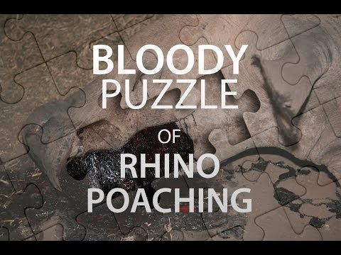 The Bloody Puzzle of Rhino Poaching