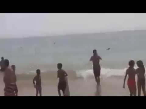 بالفيديو أسماك قرش بشاطئ أكادير