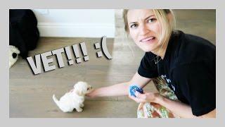 First puppy visit to the VET! :( | iJustine