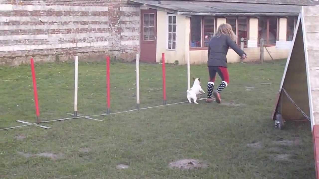 Club canin de Domvast