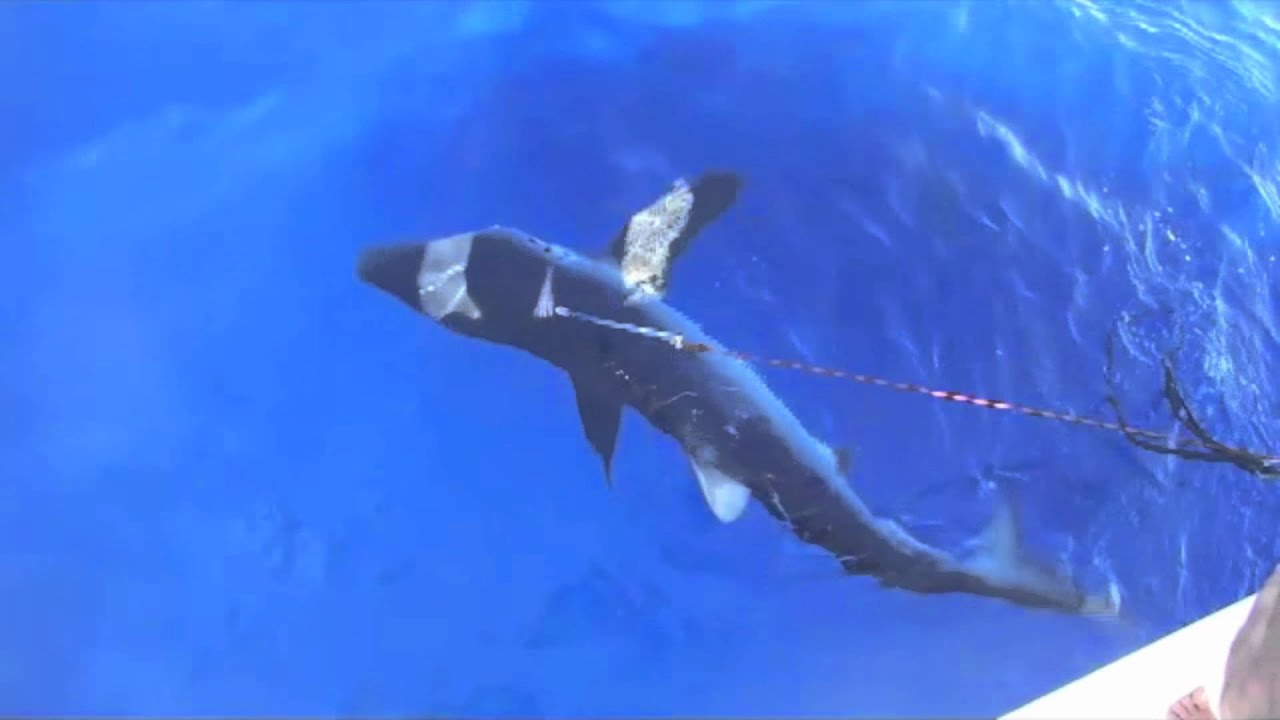 Big game fishing 200 kilo shark 3 5 meters youtube for Shark fishing games
