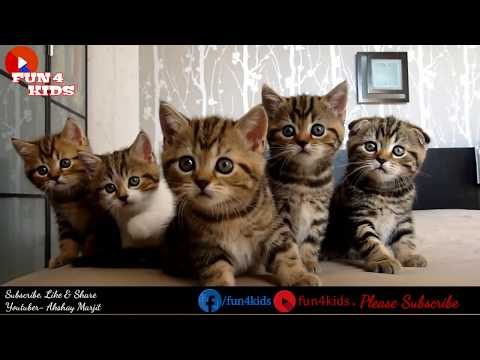Funny Cat Dancing with Hindi Songs Chammak Challo