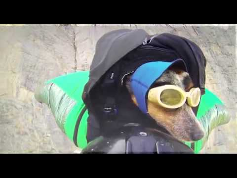 Worlds First Wingsuit BASE Jumping Dog