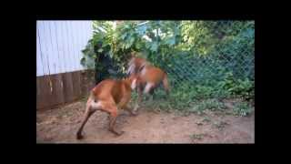 The Best Dog Fight Ever Caught On Tape
