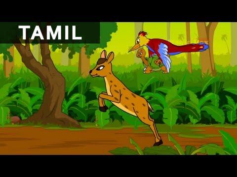 WoodPecker, Deer and Tortoise Kids Animation Cartoon Story