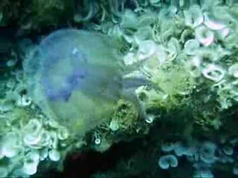 Medusa al Giglio