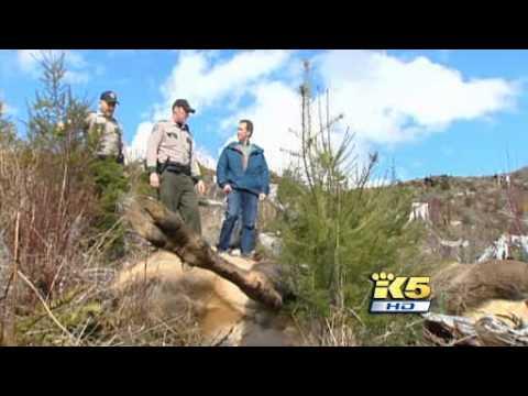 Hunting For Elk Poachers Washington Game Wardens Youtube