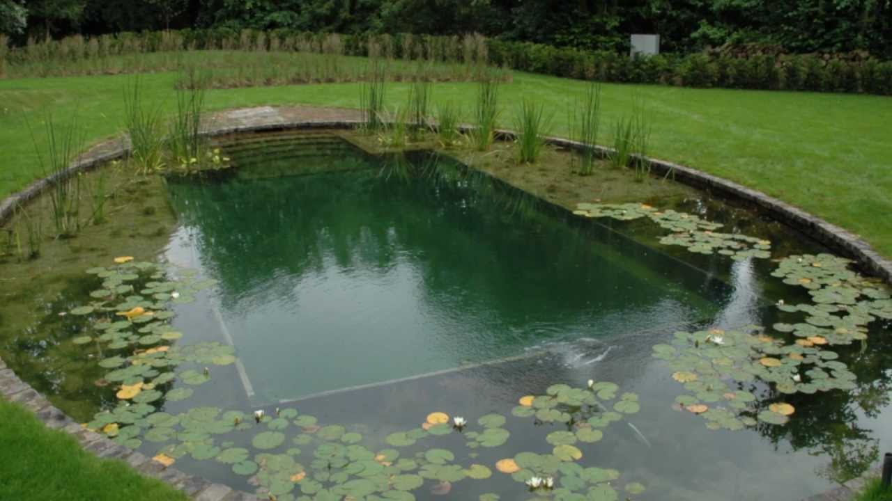 Natural Swimming Pools Youtube