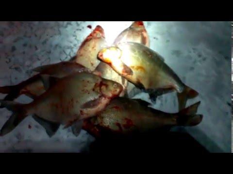 Ловля огромных лещей 3 кг. зима 2014г. Москва-река