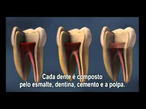 Saúde Bucal   Estrutura Dental