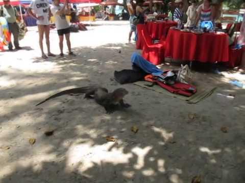 Monitor Lizard, Malaysia