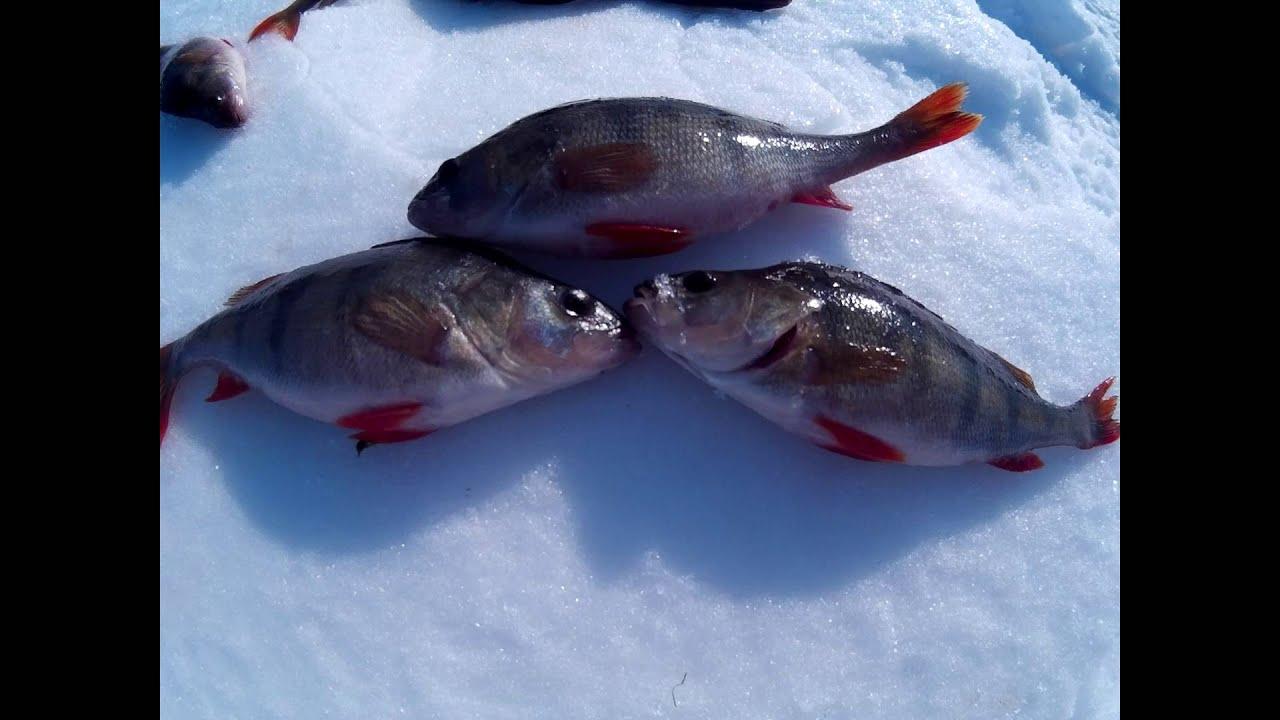 рыбалка как ловля щуки и окуня зимой