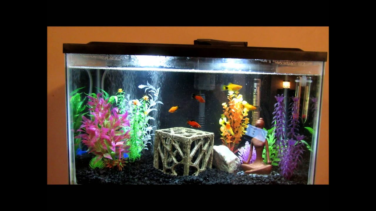 My 10 gallon tank set up with platies and 2 5 gallon betta for 2 gallon betta fish tank
