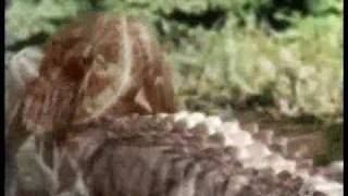 DUELO ANIMAL CAIMAN VS OSO NEGRO 5/5FINAL