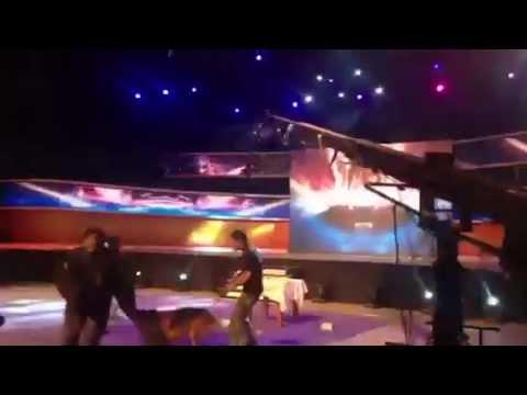 Hồ Quang Hiếu bị chó cắn khi hát Con Bướm Xuân