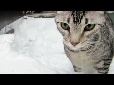 SNOW LEOPARD KITTY
