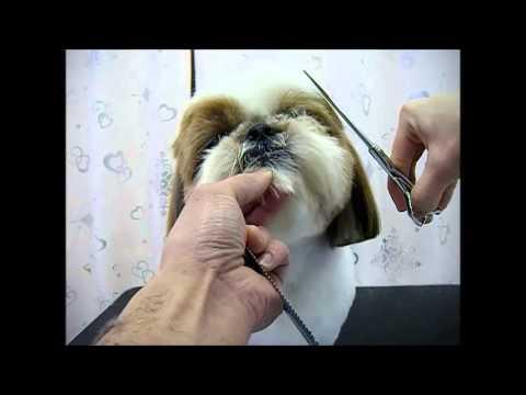 ワンtube #46 Dog Grooming