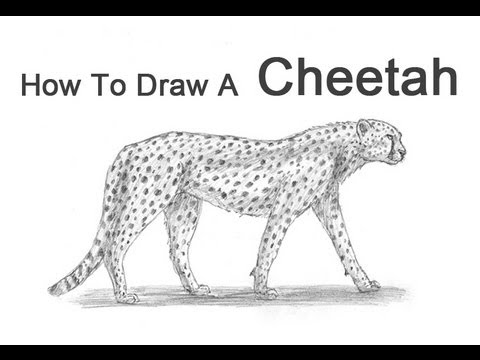 how to draw a cute baby cheetah step by step