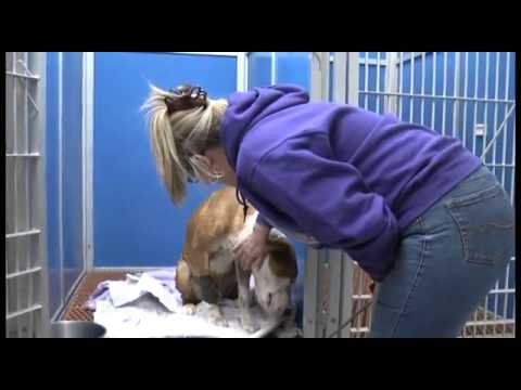 0 Rescue Story: Dog Shot and Left in Trash Bag Tied to a Fence (January 2013)