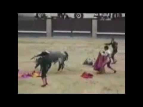 TORÇO PELO TOURO!!!!!!....Vídeo de peões, vaqueiros e toureiros, levando tombos e chifradas....