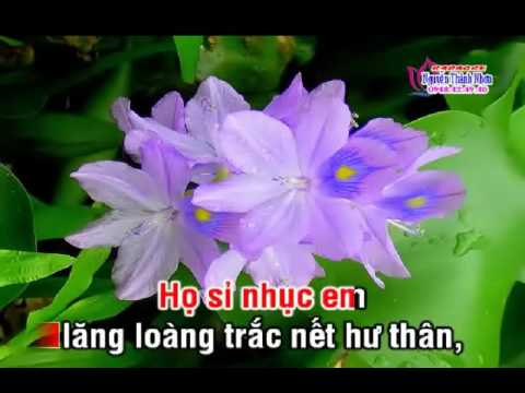 KARAOKE TanCo NOI LAI TINH XUA NGAN CHAU SONGCA