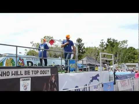 DockDogs at Gold Coast Pet and Animal Expo 2012