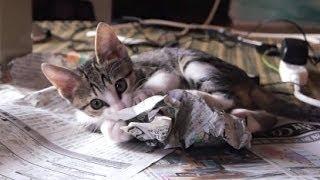 Kitten Attacks Newspaper