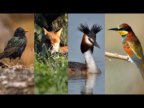 Riccardo La Torre photo  2016  - fotografia naturalistica -