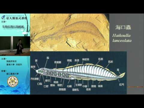 四、動物的初期演化:前寒武紀的體態實驗及寒武紀大爆發